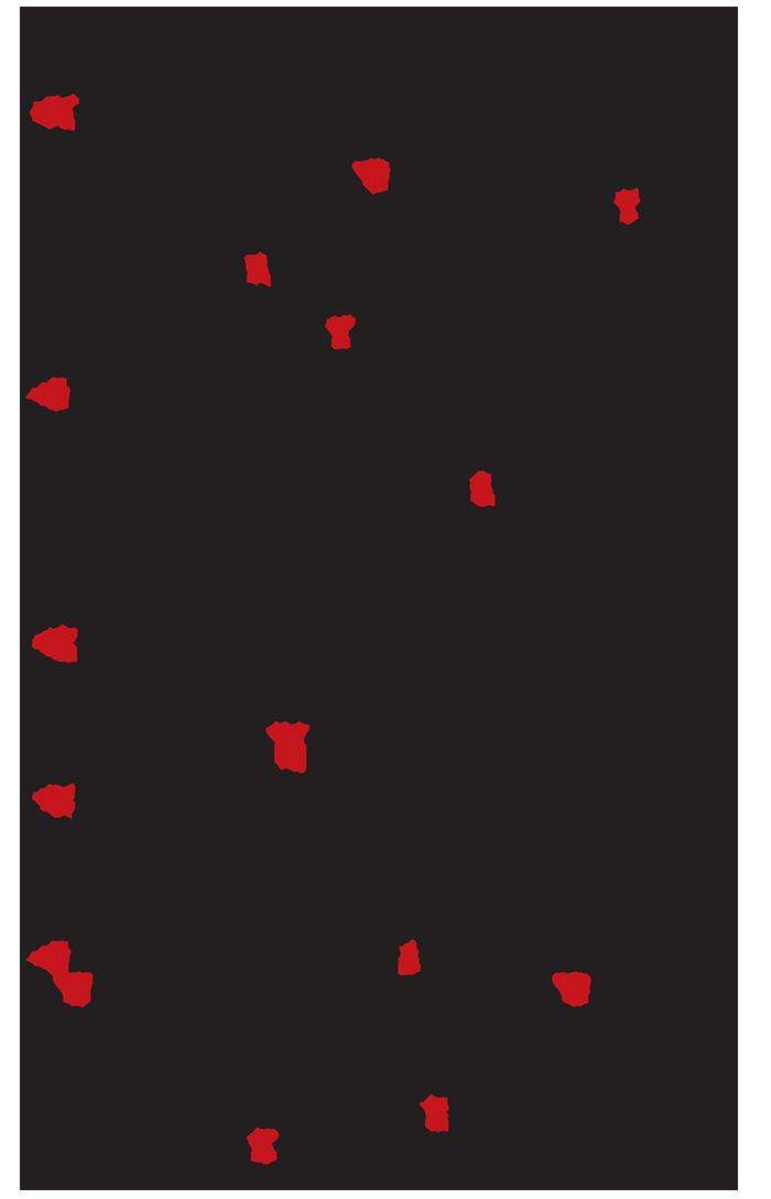 20171110aRinokeritidaIA-4